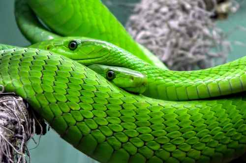 nature animal green lizard